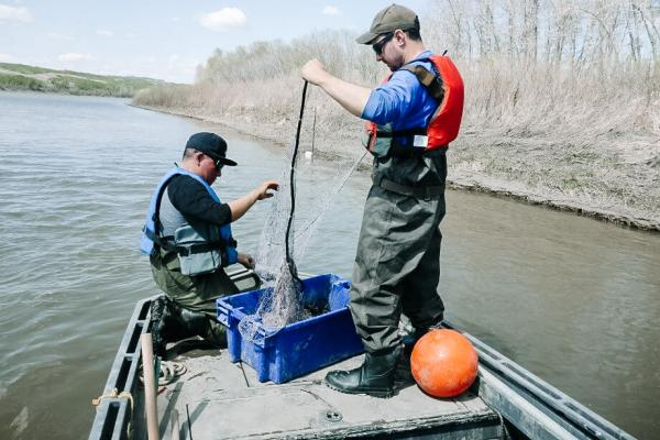 North Saskatchewan River Ecological Assessment