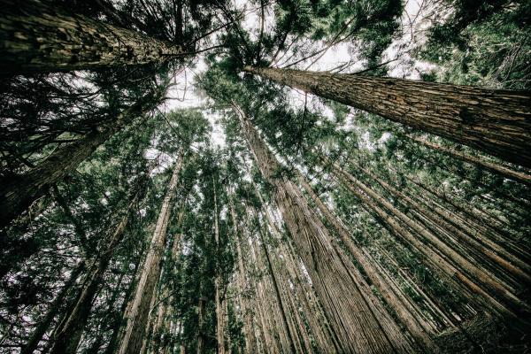 Ecology Forrest