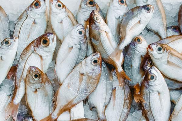 several fresh fish