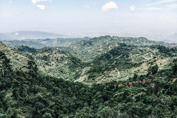 Green Mountain Jamaica