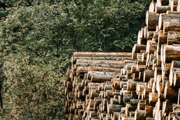 Feasibility of Former Lumber Mill Site