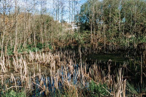 saline lagoon habitat