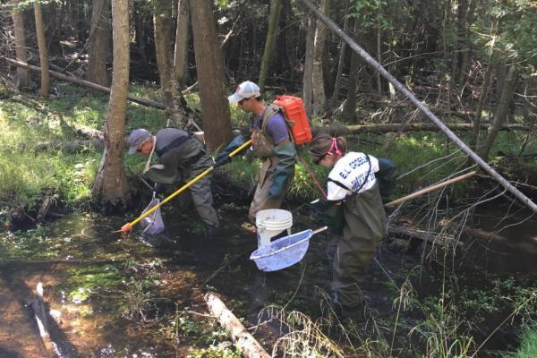 img Electrofishing survey in Hanlon Creek, Guelph ON.