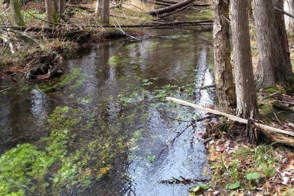 Brook trout populations have declined in Ontario due to developmental pressures. Biomonitoring surveys using conventional methods and eDNA took place during the fall 2019 to determine the presence of Brook trout in Hanlon Creek, Guelph ON.