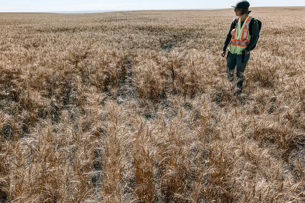 Alberta - Detailed Site Assessments, Phase 2 ESAs to assess former production facilities, and Reclamation Certificate Applications