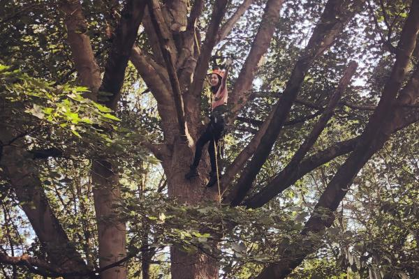 Senior Ecologist Emily Drinkwater roping down a tree
