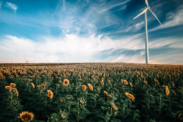 landscape with sunflowers and wind turbine