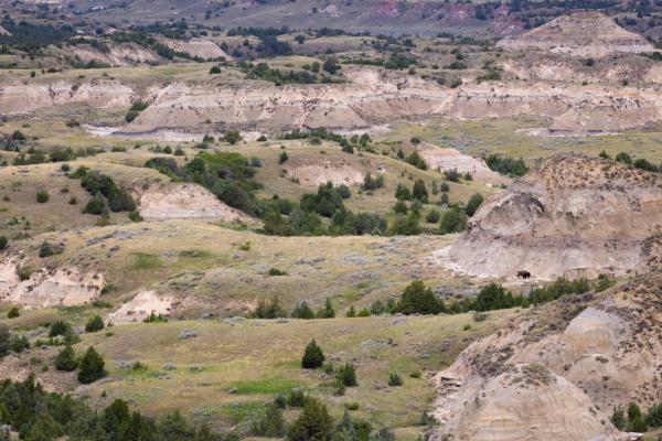 Stock image of North Dakota landscape with bison