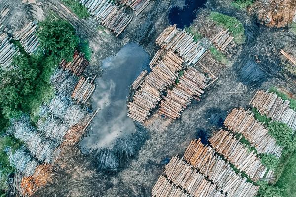 felled trees in piles