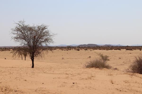 dry African landscape